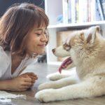Husky: caratteristiche, comportamento e addestramento della razza
